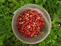Ein Eimer Erdbeeren steht auf grünem Gras lizenzfreie stockfotos