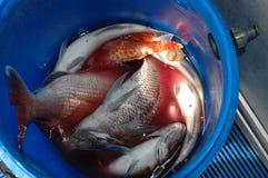 Ein Eimer frisch gefangene Fische stockfotos