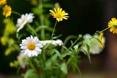 Ein einfacher Blumenstrauß von Wiesenblumen lizenzfreies stockfoto