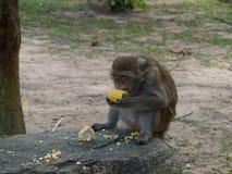Ein einsamer Affe im Wald Stockbilder