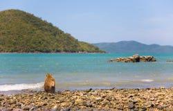 Ein einsamer Affe sitzt auf dem Ufer des Ozeans Lizenzfreies Stockfoto