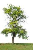 Ein einsamer Baum Lizenzfreie Stockfotos