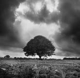 Ein einsamer Baum Lizenzfreies Stockbild