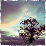 Ein einsamer Baum Lizenzfreie Stockbilder
