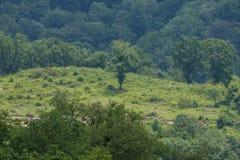 Ein einsamer Baum Lizenzfreie Stockfotografie