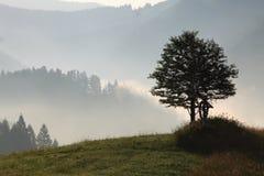 Ein einsamer Baum auf dem Gebiet an der Dämmerung Stockbilder
