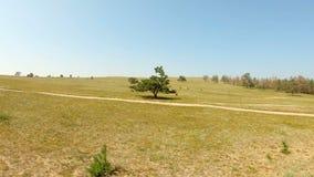 Ein einsamer Baum auf dem Gebiet stock video footage