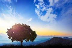 Ein einsamer Baum auf einem grünen Hügel während des Morgens Ein schönes mornin Stockbild