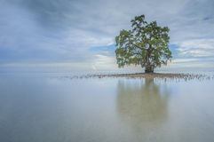 Ein einsamer Baum bei Sabah Borneo Beach, Malaysia lizenzfreie stockbilder