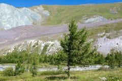 Ein einsamer Baum in den Bergen Stockbilder
