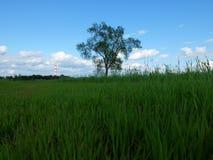 Ein einsamer Baum in einer Wiese Stockfotografie