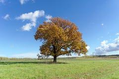 Ein einsamer Baum in einer Wiese Lizenzfreies Stockfoto