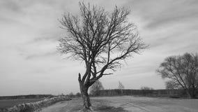 Ein einsamer Baum steht isolted auf einem Feld mit Schnee während des Winters Lizenzfreie Stockfotos