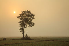 Ein einsamer Baum und Zwiebelfelder im Winter unter der Sonne am Norden Stockfotografie