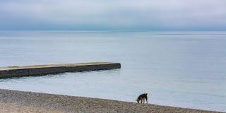 Ein einsamer Hund an einem alleinen Seeufer mit einem Wellenbrecher lizenzfreies stockfoto
