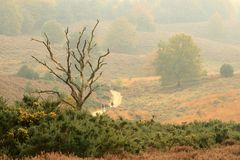 Ein einsamer toter Baum im Herbst Lizenzfreie Stockbilder
