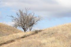Ein einsamer trockener Baum ohne Blätter steht auf einem Gebiet, das mit trockenem Gras umfasst wird stockbild