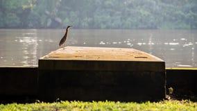 Ein einsamer Vogel Lizenzfreie Stockbilder