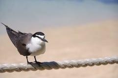 Ein einsamer Vogel lizenzfreies stockbild