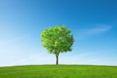 Ein einzelner Baum Lizenzfreie Stockfotos