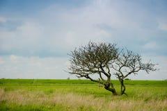 Ein einzelner Baum auf einem breiten Gebiet Stockbilder