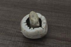 Ein einzelner Pilz Stockbild