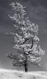 Ein einzelner stehender Baum mit einem schwarzen Vogel Lizenzfreie Stockfotografie