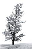 Ein einzelner stehender Baum mit einem schwarzen Vogel Stockfotos