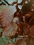 Ein einzelner Tropfen auf einem orange Herbstblatt lizenzfreie stockfotografie