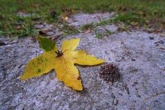 Ein einzelnes gelbes Blatt auf dem Boden Stockfotografie