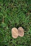 Ein einzelnes totes Blatt legen auf das grüne Gras Lizenzfreie Stockfotografie