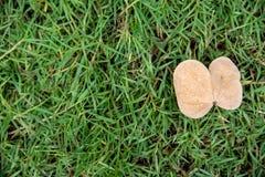 Ein einzelnes totes Blatt legen auf das grüne Gras Stockbild