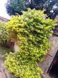 Ein Einzelteil, das ein Haus verschönern, ist Blume stockfotografie