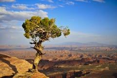 Ein einziger Baum, der eine schöne Ansicht in Utah, USA aufpasst Stockfotografie