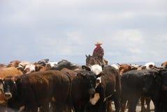 Vieh Hearding Lizenzfreie Stockfotos