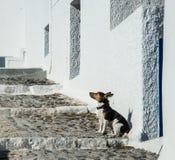 Ein einziger Hund auf einem Bürgersteig auf Santorini-Insel in Griechenland stockfoto