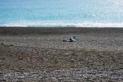Ein einziger Mann auf einem verlassenen Pebble Beach auf dem Cote d'Azur Erholung durch das Meer stockbilder
