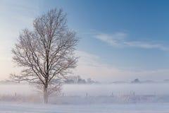 Ein eisiger Baum, der vor einem Zaun auf einem Feld mit Schnee steht Stockbild