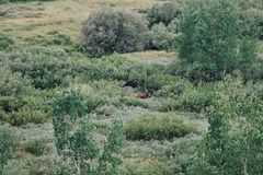 Ein Elch und ihr Baby von einer Unterlassung an großartigem Nationalpark Teton stockfoto