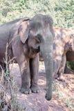 Ein Elefant Lizenzfreies Stockfoto