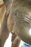 Ein Elefant im Zoo Lizenzfreie Stockfotos