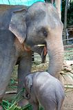 Ein Elefant mit seinem kleinen Kind Lizenzfreies Stockfoto