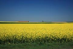 Ein endlose blühende Canola Felder Stockfotos