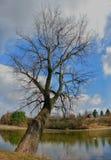 Ein enormer Baum Lizenzfreies Stockfoto