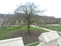 Ein enormer Baum im Schloss-Boden lizenzfreie stockfotografie