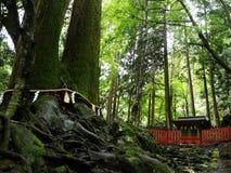 Ein enormer Baum und ein kleiner Tempel Stockfotos