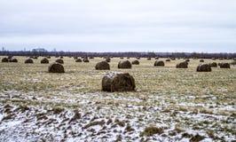 Ein enormes verlassenes Feld mit Heuschobern Stockbilder