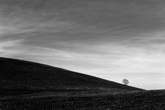 Ein entferntes, loney Baum auf einem bloßen Hügel, unter einem tiefen Himmel mit weißen Wolken Stockfotografie