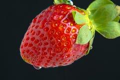 Ein Erdbeermakro Stockfotografie