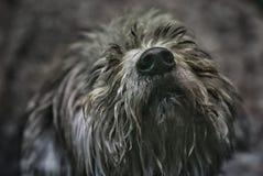 Ein erfüllter Hund bittet um Aufmerksamkeit und Neigung stockbild